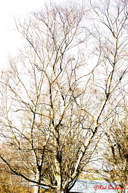 Tree (High Key)