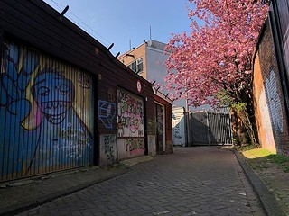 Spring blossoms in my buurt 🌸🌸🌸🌸🌸 | by farflungistan