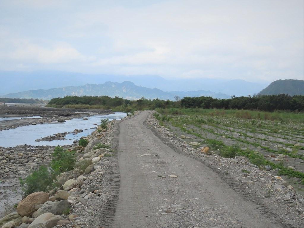 台東林管處在卑南溪北岸的高灘地(右)植樹造林,和水覆蓋(左)相互幫補。攝影:廖靜蕙