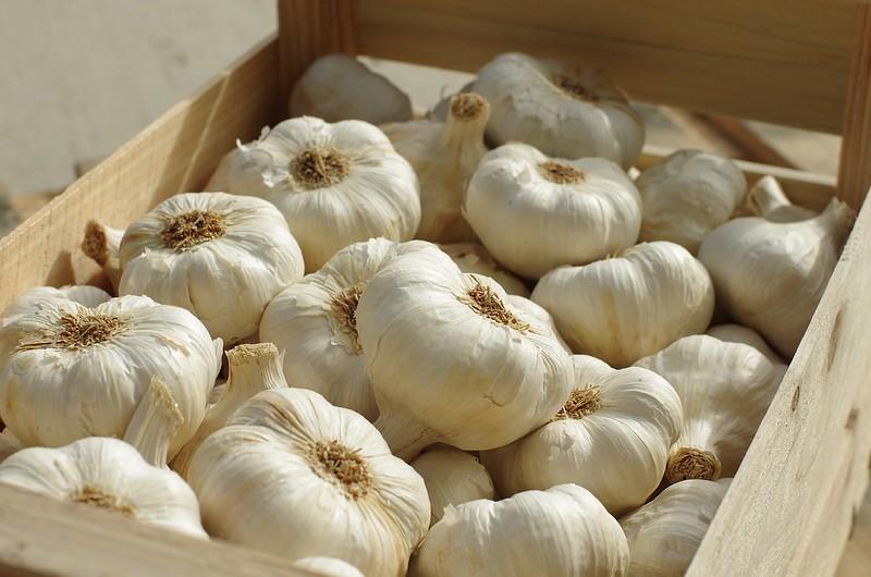 garlic-3208352_1920