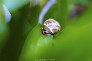 Hello Mr. Snail | by dj murdok photos