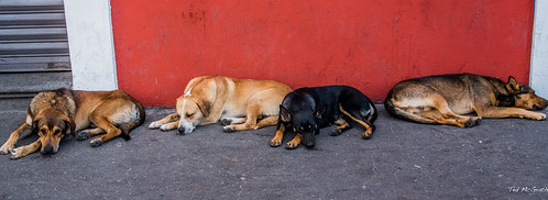 2018 - Mexico - Atlixco - Let Sleeping Dogs Lie