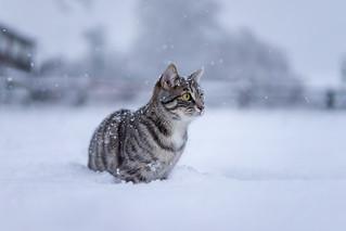 Winterkatze 2 | by thinretrogod