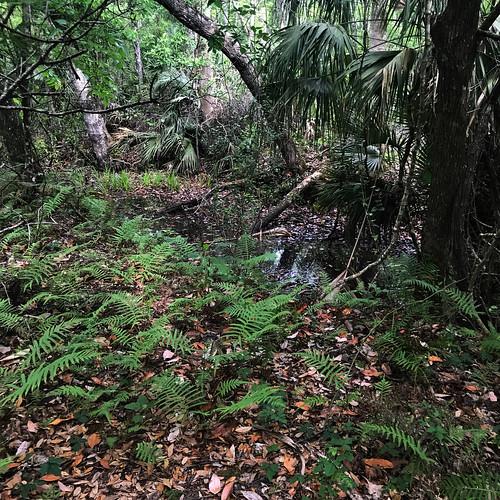 florida gulfcoast park nature plants landscape aripekasandhillspreserve aripeka