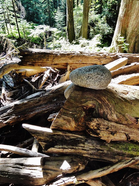 Pile of logs in the sunlight, with a large granitic cobble perched atop one.