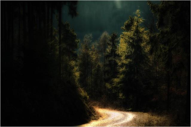 Die Schönheit des Waldes