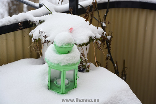 Flamingo in snow | by iHanna