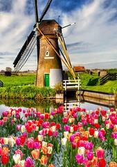 Landschaft - Windm�hle am Bach ums�mt mit Tulpen