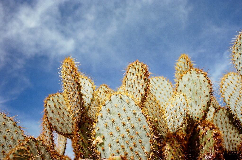 cacti on blue