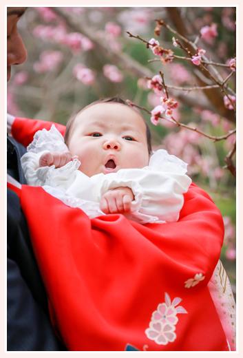 桜の花と赤ちゃん 春の初宮詣り