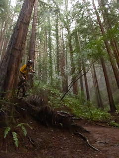 Redwood Park MUni   by Tom Holub