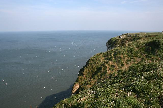 Flamborough Head near Bempton
