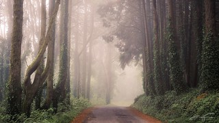 Misty road (explore) | by jorgeverdasca