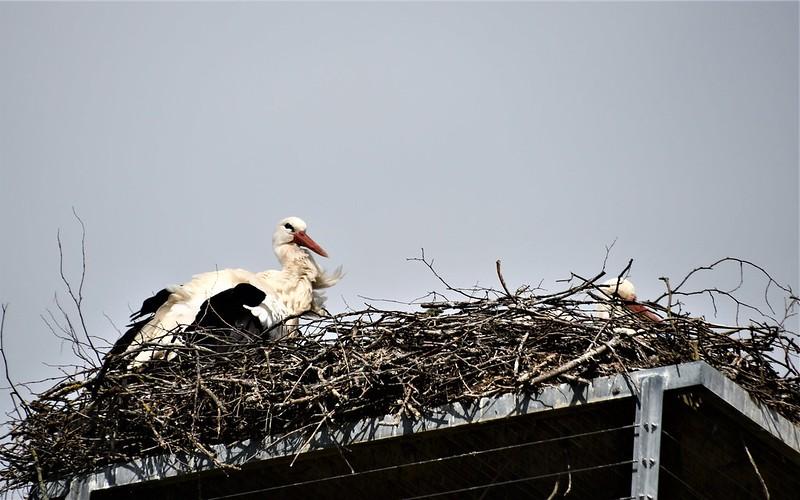 Stork 06.04 (1)