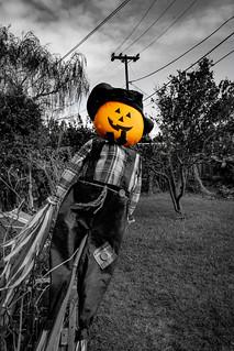 Backyard Pumpkin Pt. 2