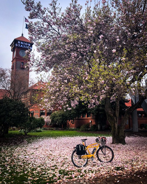 Spring and Union Station. #blossom #unionstationportland #schwinnheavyduti