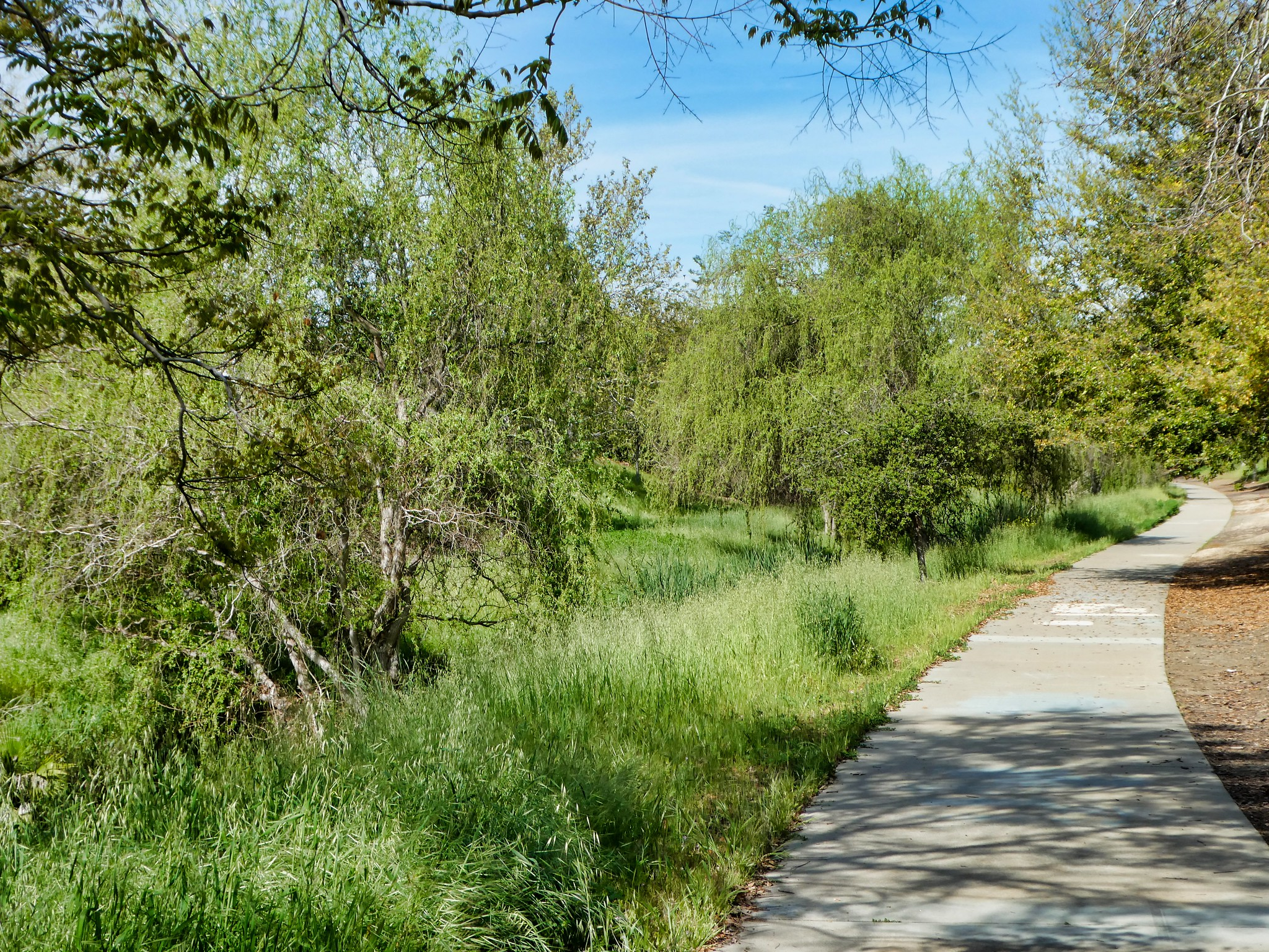 2019-04-08 - Outdoor Photography - Nature - Walking along the Catanzaro Trail