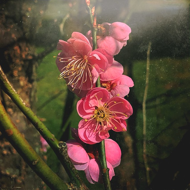 April pink