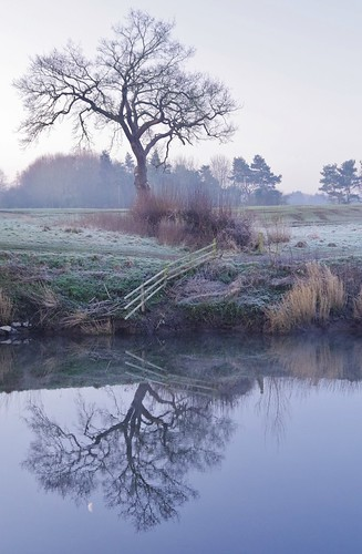 mist morning fields river riverbank riversevern shropshire shrewsbury sundorne reflections
