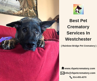 Best Pet Crematory Services In Westchester | by princejames.james92