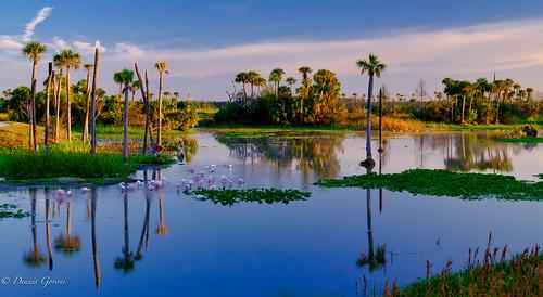 action background bird florida landscape orlandowetlands sunrise water wildlife