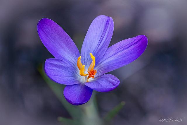 Mo, 2019-02-18 16:27 - Das Frühlingserwachen ist jedes Jahr aufs Neue einfach wunderbar!  The spring awakening is wonderful every year!
