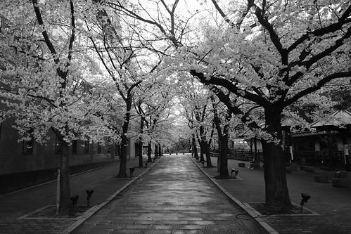 03-04-2019 Kyoto (42)