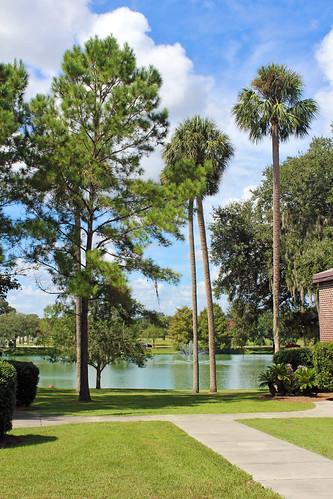 landscape park trees palmtrees pine lake ocala florida unitedstates