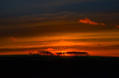 cresswell northumberland sunset trees coth5