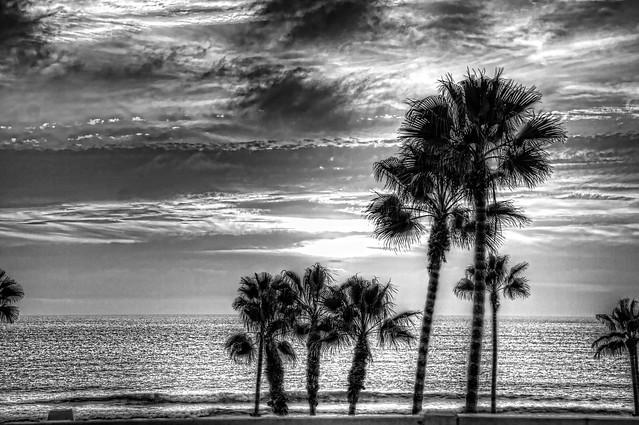 Palm Sunset B&W 9-1-11-19