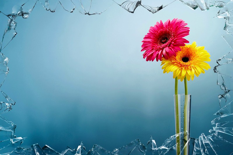 Обои стекло, цветы, фон, ваза картинки на рабочий стол, раздел цветы - скачать