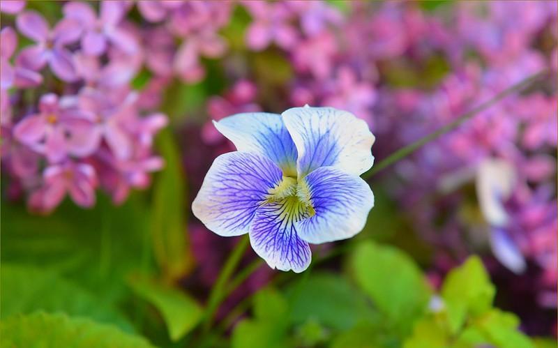 Обои Весна, Цветок, Flower, Spring картинки на рабочий стол, раздел цветы - скачать