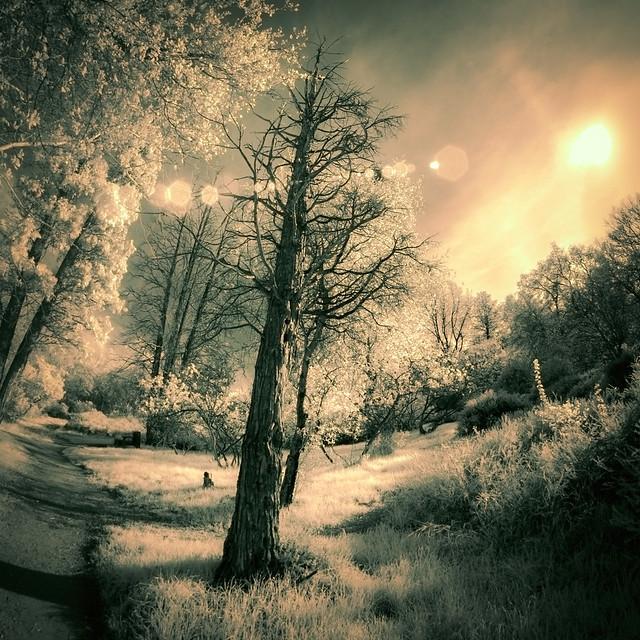 Winter Trees - IR Pentatone