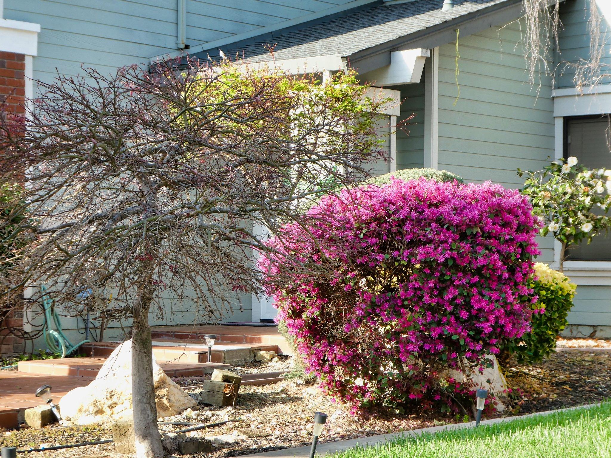 2019-03-19 - Nature Photography - Plants - Frontyards