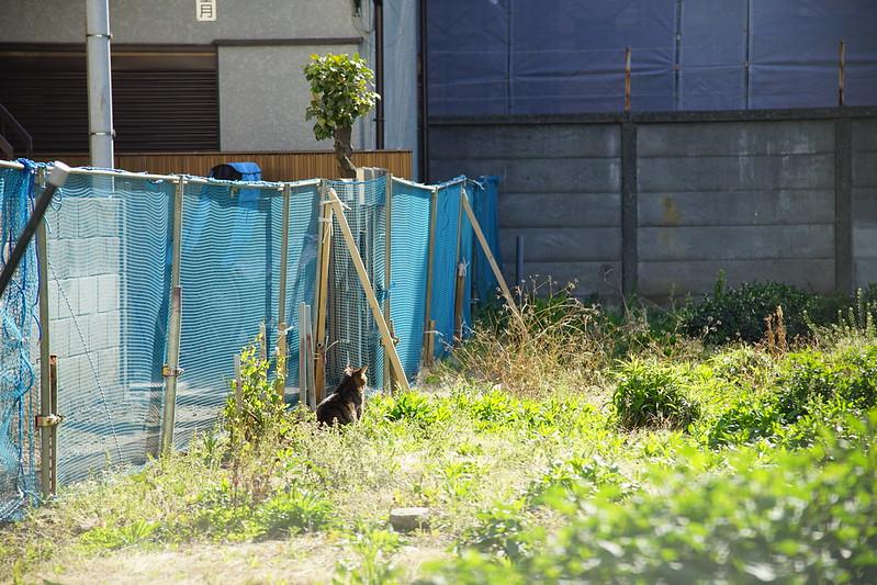 Sony α7Ⅱ+AF S NIKKOR 24 120mm 1 4G ED VR池袋一丁目空き地の猫 キジ虎