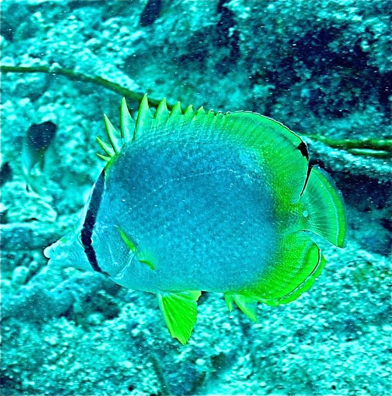 Aruba scuba shots videos 316 - Version 2