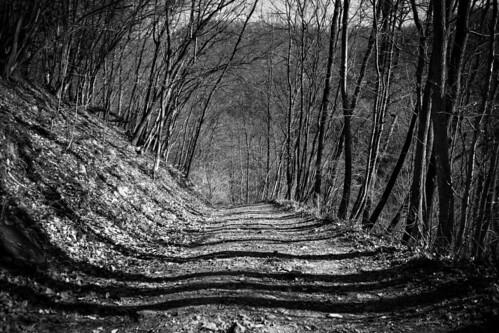 Taller than the trees | by Maria Zaharieva