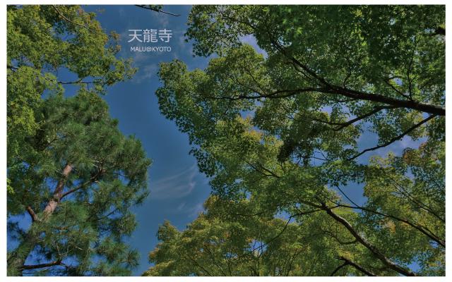 嵐山天龍寺-12