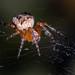 Ecrivaine/Writer Spider