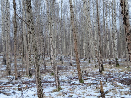 Fosforiidimaa / Phosphate Rock mining area in Estonia | by IngoValgma