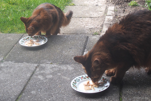 Fine dining on pretty plates, 1 - Happy Caturday