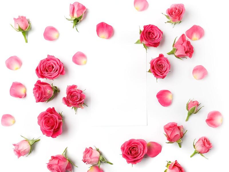 Обои розы, бутоны, pink, flowers, romantic, roses картинки на рабочий стол, раздел цветы - скачать