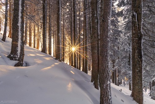 Sunrise in the forest - Gurnigel | by Captures.ch