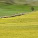 Minimal in Val d'Orcia - Siena by Darea62