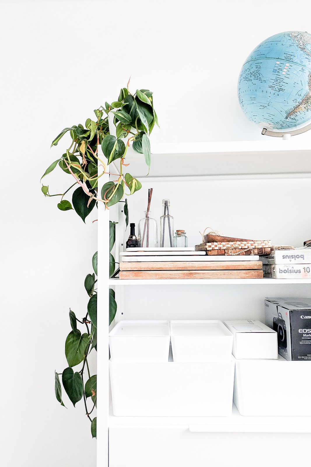 Common Houseplant Questions, Answered
