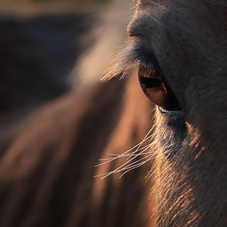 Very curious horse