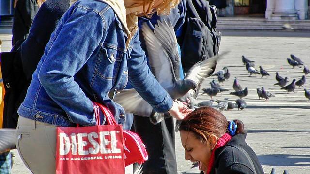 Taubenfütterung auf dem Markusplatz