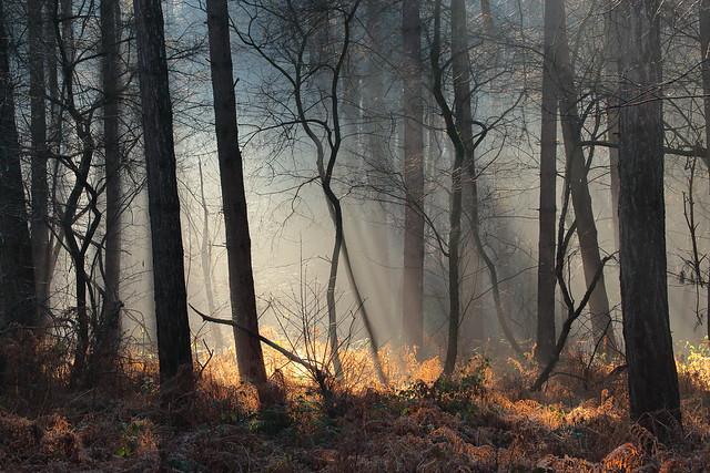 Lumière dans les bois / Light in the woods