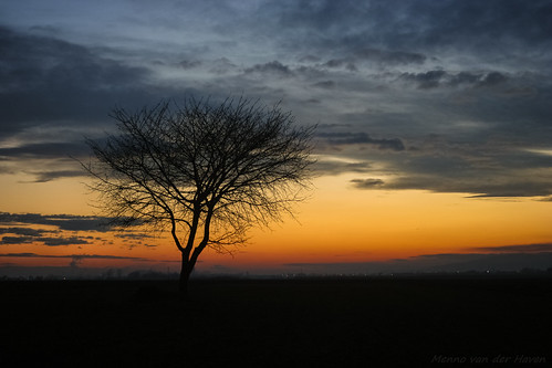 tree lone solitary sunset sky twilight romania silhouette transylvania evening colors alone