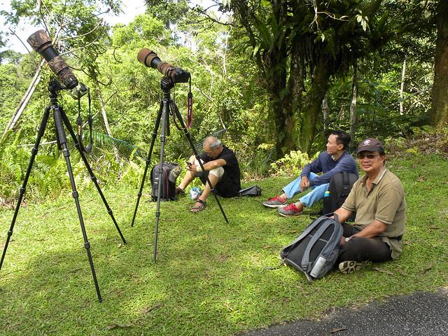 Local birders, Birders locali, Местные птичники